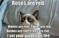 Funny pictures about Grumpy Cat is feeling poetic. Oh, and cool pics about Grumpy Cat is feeling poetic. Also, Grumpy Cat is feeling poetic. Grumpy Cat Quotes, Meme Grumpy Cat, Grumpy Kitty, Meme Comics, Funny Cats, Funny Animals, Funny Jokes, Funniest Animals, Cats Humor