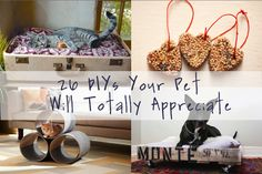 26 DIYs Your Pet Will Totally Appreciate