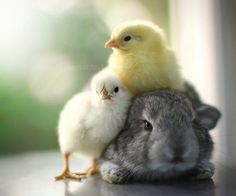Chick magnet ;)