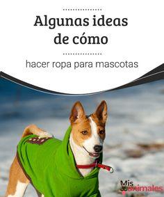 Algunas ideas de cómo hacer ropa para mascotas - Mis animales  Si eres de los que te gusta llevar a tu perro a la moda te mostramos tres prácticas ideas para hacer ropa para mascotas, toma buena nota para sacar ideas.