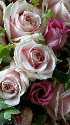 ROMANCE, ROSES, BUBBLY Bella Donna'sLuxuryDesigns