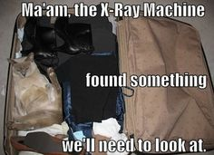 its funny because its going through the machine at the airport and they found a cat sleeping