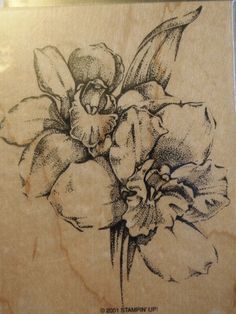 Retired Stampin Up Stipple Orchid ~ Floral Sketch ~ 2001
