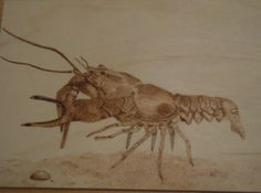 Woodburned image of a crayfish, done on birch. Based on a drawing made by myself.