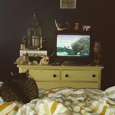 Watching the Kitten Bowl with Hisu 2015
