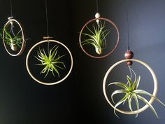 Hanging Rustic Air Plant Holder with Handmade Wood Indoor Plant Hanger, Succulent Planter Air Display, Plant Lover Gift, Flower Pot Types Of Air Plants, Air Plants Care, Wood Planters, Indoor Planters, Plants Indoor, Indoor Herbs, Indoor Gardening, Hanging Air Plants, Diy Hanging