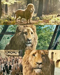 Aslan - he was the most beautiful in the LWW