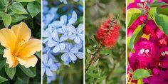 🌻🌿🌷🌺 Επιλέγουμε τα πιο ανθεκτικά φυτά για το καλοκαίρι, λουλούδια που αντέχουν στον ήλιο και τη ζέστη για να απολαμβάνουμε στον κήπο και το μπαλκόνι μας.