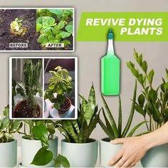 Inside Plants, All Plants, Green Plants, Indoor Plants, Plants Grown In Water, Fertilizer For Plants, Liquid Fertilizer, Raised Planter Beds, Raised Garden Beds