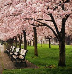 doet me denken aan het mercator plein waar ik heb gewoont ik keek uit op de rose bomen , daarom hou ik van rose word er vrolijk van xxx