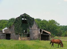 barn with horse | Flickr - Photo Sharing!