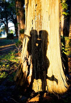 Silhouette and Shadow Engagement Photos ~ we ♥ this! moncheribridals.com #engagementphotos #shadowengagementphotos