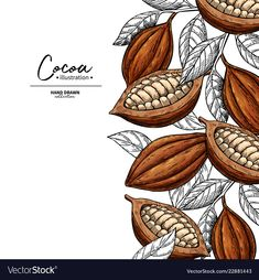 Find Cocoa Frame Vector Superfood Drawing Template stock images in HD and millions of other royalty-free stock photos, illustrations and vectors in the Shutterstock collection. Thousands of new, high-quality pictures added every day. Fruit Illustration, Food Illustrations, Graphic Illustration, Engraving Illustration, Branding Design, Logo Design, Design Packaging, Label Design, Package Design