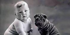 Hangi Köpek Senin Kişiliğini Yansıtıyor?