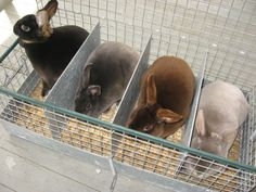 A few Mini Rex rabbits on an outing. From left, a black otter, a blue, a chocolate, and a lilac otter. Mini Rex Rabbit, Dutch Rabbit, Bunny Rabbit, Kawaii Bunny, Cute Bunny, Adorable Bunnies, Outdoor Rabbit Hutch, Some Bunny Loves You, Rabbit Hutches