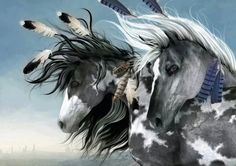 Gray Paint Indian Ponies With Flamboyant Feathers.