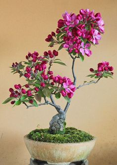 Bonsai flower plants are the miniature trees that are grown in containers as a form of Japanese art. Bonsai trees give much pleasant look to interiors. Ikebana, Plantas Bonsai, Miniature Trees, Deco Floral, Bonsai Garden, Tree Garden, Growing Tree, Small Trees, Trees To Plant