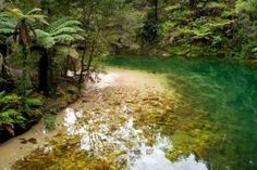 Medieval Forests of Abel Tasman National Park - New Zealand
