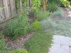 Drought tolerant landscape by nativesungardens, via Flickr