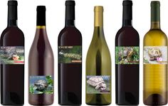 Turtle Rescue of Long Island Wines