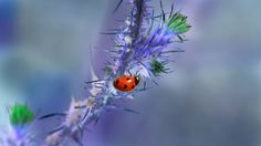 Coccinelle by Maxime Raynal on 500px