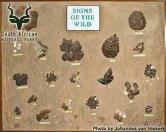 KNP - Satara - Eco Center Kruger National Park, National Parks, Van Niekerk, Park Photos, African