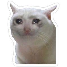 'Sad Cat Meme' Sticker by katikat Cute Laptop Stickers, Meme Stickers, Printable Stickers, Sad Cat Meme, Bear Meme, Funny Bears, Image Cat, Mood Pics, Cute Memes
