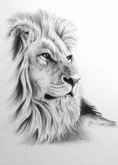 Lion tattoos hold different meanings. Lions are known to be proud and courageous creatures. So if you feel that you carry those same qualities in you, a lion tattoo would be an excellent match Kunst Tattoos, Tattoo Drawings, Tattoo Art, Animal Drawings, Pencil Drawings, Drawing Animals, Lion Sketch, Lion Head Tattoos, Lion Tattoo Design