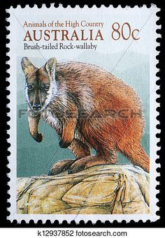 "Issued of February Brush-tailed Rock-wallaby ""Petrogale penicillata"" Bizarre Animals, Animals Images, Wild Animals, Australian Vintage, Star Trek Characters, Australian Animals, Vintage Stamps, Fauna, Stamp Collecting"