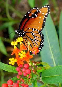 Love the flower colors together with the butterfly