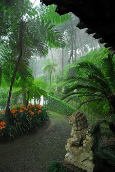 Prachtig groen Madeira