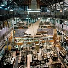 Image result for pitt rivers museum