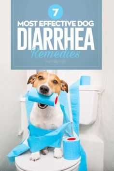 When you experience watery and runny stools with cramps or feel bloated, you will most likely to have diarrhea. There are many types of diarrhea and their causes. Preventions ideas and home remedies to counter diarrhea. Food Dog, Best Dog Food, Best Dogs, Dog Diarrhea Remedy, Diarrhea In Dogs, Dog Clicker Training, Dog Training Courses, Sick Dog, Animaux