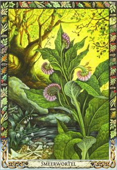 Comfrey | Druid Plant Oracle by Philip and Stephanie Carr | Illustrated by Will Worthington | Meaning: structure, base of the ancestors and bring together| Reversed: abandonment, separation and individuality
