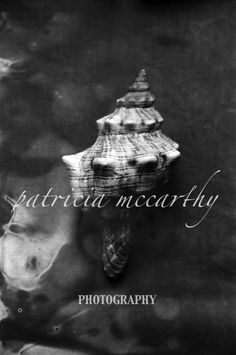 Sea Shell 2.  #patriciamccarthyphototgraphy.