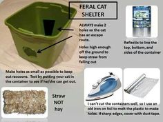 How to make a feral cat shelter for the winter