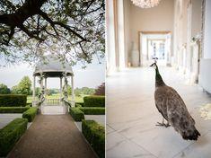 Beautiful Froyle Park in Hampshire. Wedding Venues, Wedding Photos, Oriental Cat, Park Weddings, Hampshire, Spring Wedding, My House, Beautiful, Wedding Reception Venues
