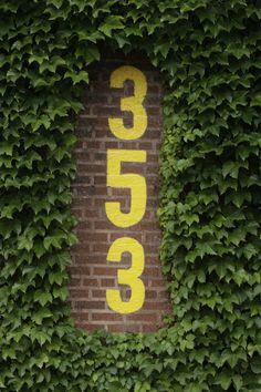 The Wrigley Field Ivy