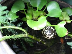 emmymade in Japan: More on How to Make a Mini Pond