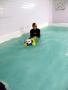 Canine Hydrotherapy Dog Pools Inc Swimming Pools For Dogs