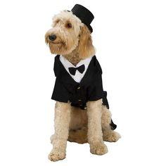 Dapper Dog Pet Costume : Target