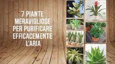 7 piante meravigliose per purificare efficacemente l'aria