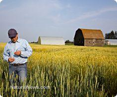 Australian organic farmer files lawsuit after crop ruined by GMO contamination  http://www.naturalnews.com/043901_GMO_contamination_organic_farmer_Australia.html#ixzz2tEJFWgXl