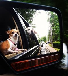 Dog happiness= cruisin' in the car!  #car #pets #dogs #toyota