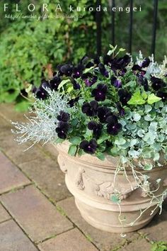 Image of black viola container - Pflanzideen Container Flowers, Container Plants, Container Gardening, Flower Pot Design, Backyard Projects, Green Flowers, Garden Planters, Garden Planning, Pansies