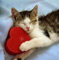 Yo quiero a mi corazón, ,,,