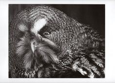 カラフト フクロウ