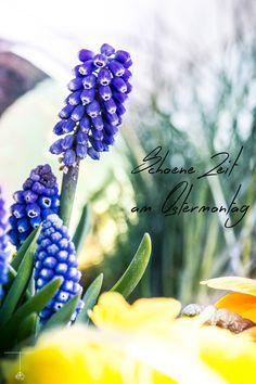 Happy Easter Ostern Osterfest Krokus Flower Flowers Blumen Blume Blüte Blossom Bloom Garten Garden Easter Ostern Detail Details Flora Plants Plant Pflanze Pflanzen Moos Dosh