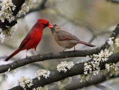 Birds are so amazing....