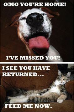 The truth about cats and dogs . . . LOL.